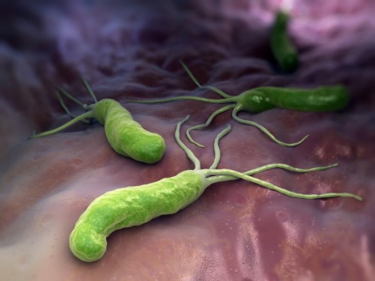 helicobactera